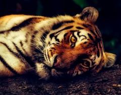 Karrewiet: Minder exotische dieren in Spaanse zoo