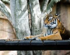 Karrewiet: strengere regels voor dierentuinen
