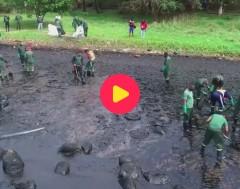 Karrewiet: natuurramp in Mauritius door een groot olielek