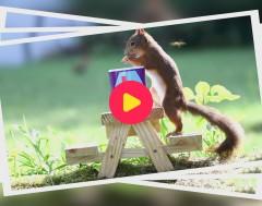 Karrewiet: Hoe word je eekhoornfotograaf in je eigen tuin?