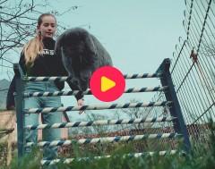 Karrewiet: Pluisje en Snufje trainen voor de konijnenjumping