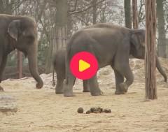 karrewiet: olifant wordt vrijgelaten