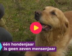 Karrewiet: Hoe oud is jouw hond écht?