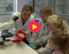 Karrewiet: Heeft een kiwi DNA?