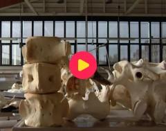 Karrewiet: Potvis Valentijn wordt proper gemaakt