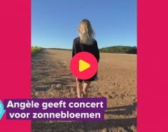 Karrewiet: Angèle geeft concert voor... zonnebloemen