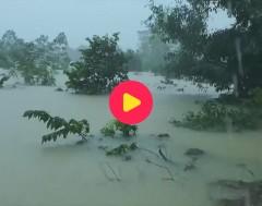 Karrewiet: Storm Linfa raast over Vietnam