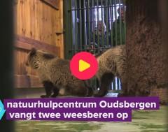 Karrewiet: Twee beren op visite in Oudsbergen
