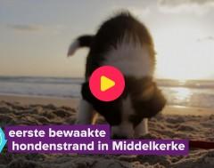 Karrewiet: Eerste bewaakte hondenstrand in Middelkerke