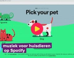 Karrewiet: Maak een afspeellijst voor je huisdier