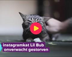 Karrewiet: Lil Bub is overleden