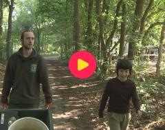 Karrewiet: Natuurpunt probeert beschadigde eiken te redden