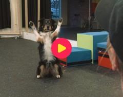 Karrewiet: Elke en Jessy zijn wereldkampioen dog dancing