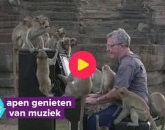 Karrewiet: Pianoconcert voor apen