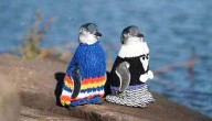 pinguins met truitje