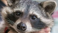 Cody de wasbeer