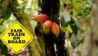Week van de Fair Trade
