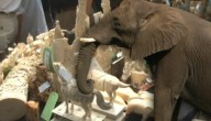 Olifant ivoor