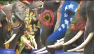 Beschilderde olifanten