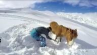 Paard in sneeuw