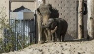olifantenverzorger