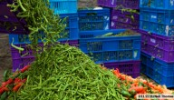 Voedselverspilling ©11.11.11/Neil Thomas
