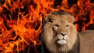 Leeuw of vuur?