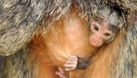 aapje geboren