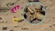 Reptiel op Mars