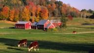 bioboerderij