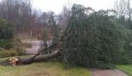 Omvallende boom