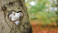knoflook redt bomen