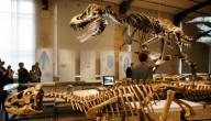 nieuwe dinosoort ontdekt