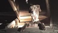 Hond is inbreker