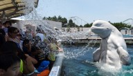 dolfijn spuwt water