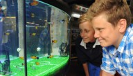 EK-aquarium