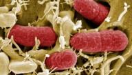 ehec-bacterie