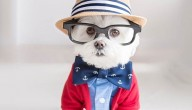 Hippe hond