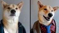 hond in kleren