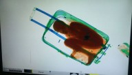 Jongen in koffer