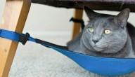 hangmat voor kat