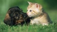 Kat gered dankzij hondenbloed