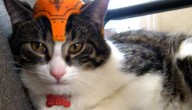 kat met helm