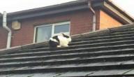 Konijn op het dak