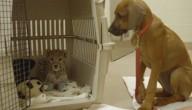 hond in operatiezaal