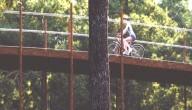 Fietspad door de bomen