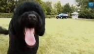 Tweede hond voor familie Obama