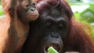 Apen met rechten