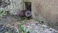 Kleine otters GaiaZOO krijgen naam