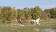 paardsurfen